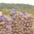 Uzgajivači krompira pobedili giganta za piće i hranu - sad traže odštetu