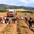 Borike proizvedu godišnje 2.000 tona sjemenskog krompira - sve bi moglo završiti u Evropi