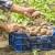 Zabranili uvoz: U krompiru nađene nematode, a grožđu povećan sadržaj pesticida