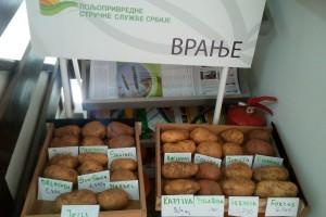 Neočekivano: Vojvođanski prinosi krompira kod Bujanovca