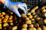Čile će pomagati BiH oko sjemenskog krompira