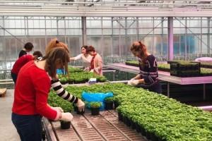 Kružna privreda - na krovu zgrade uzgajaju grgeče i povrće