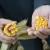 U odnosu na isti period prošle godine cena kukuruza viša za 36 odsto
