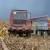 EU: Najviše kukuruza beru Španjolci - 11,8, a najmanje Rumunji - 5,7 tona po hektaru