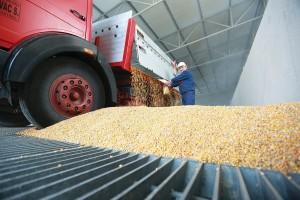 Farmofit: Proizvodnja stočne hrane odvija se bez poteškoća