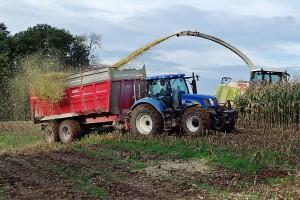 Siliranje kukuruza - koji je najbolji momenat za početak