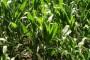 Kvalitetno sjeme je srž uspjeha poljoprivredne proizvodnje