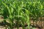 Administracija koči uspješne poljoprivrednike?