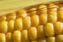 Jakovina o uredbi za uvozne i izvozne carine