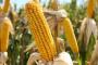 Tko je najviše kriv za rekordan rast cijena hrane?