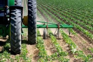 Okopavine imaju velike potrebe za hranivima - obavite kvalitetnu prihranu za bogati prinos