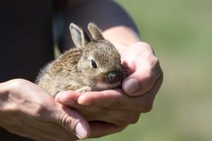 Kunići ljubimci: Vesele i pitome životinjice voljet će vaše društvo
