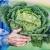 """Zeleno povrće ne može podneti 25% ljudi jer imaju """"gorki gen"""""""