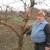 Kupusina: Jeleni obrali voće