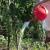 Kvasac - odlično đubrivo za plodonosne biljke