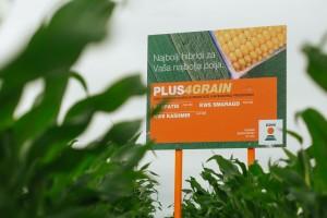 """Biti svake godine u plusu nije """"nemoguća misija"""" s ovim hibridima kukuruza"""