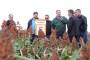 Novo u KWS asortimanu - sirak za proizvodnju zrna