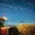 Rekordni prinosi kukuruza u intenzivnoj proizvodnji