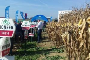 Odličan urod kukuruza potvrdio da Pioneer s razlogom ostaje među vodećima u branši