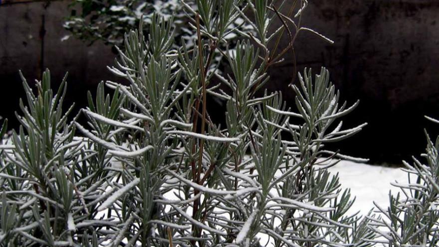 Dekorativne Biljke Za Zimske Dane Ukrasno I Lekovito Bilje