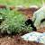 Vrt bez motike je moguć uz lazanje malč