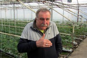 Povrtarima potrebna organizacija kao u Italiji?