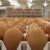 Lideri francuskog tržišta jaja od nosilja iz slobodnog uzgoja
