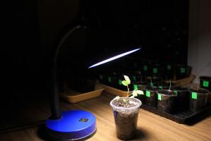 Kako iskoristiti LED sijalice i pomoći svojim biljkama da rastu