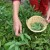 Raste svijest o potrebi promjene načina ishrane i liječenja biljem
