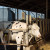 Revolucija za farme: Nova aplikacija, mašina za snabdevanje svežom travom i proizvodnju stajnjaka
