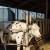 Revolucija na farmi: Nova aplikacija, stroj za opskrbu svježom travom i proizvodnju gnojiva