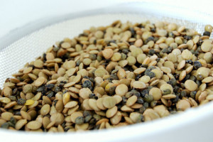 Sočivo - gajenje i hranljiva svojstva
