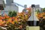 Ekološko maslinovo ulje Cemex-ovih stručnjaka