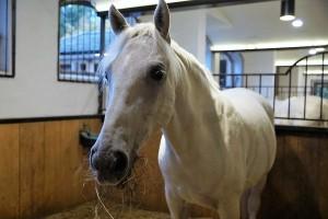 Domaći konji kao turistička atrakcija i ljubimci