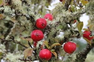 Lišajevi - štete li voćkama i zbog čega su korisni?