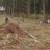 Pošumljavanje: Listopadne šume na obroncima Povlena