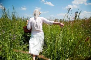 Lekovito bilje razvojna šansa jugoistočne Srbije