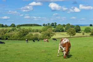 Turski ulagači planiraju investirati u poljoprivrednu proizvodnju u Čeliću