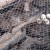 Mini farma japanskih prepelica izuzetno uspješna - jaja se rasprodaju za par sati