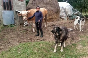 Ljubica Zarić: Sreća me uporno zaobilazi, ali bila bi baš to da uspijem sačuvati štalu
