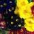 Pažnja se poklanja cvijećem - uzvratite njegovanjem biljke