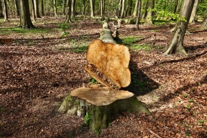 Javnost o obrascima prethodne procjene za izmjene Zakona o šumama i prometu drva