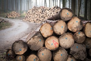 Hrvatske šume odobrile sirovinu za 50 novih kupaca