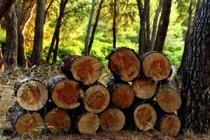 Pravilnik o doznaci stabala, obilježbi šumskih proizvoda, teretnom listu i šumskom redu