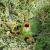 Napad noću: Jazavci se slade neretvanskim lubenicama?