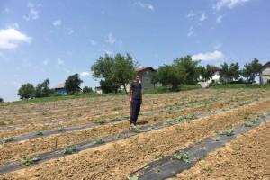 """""""Čutina lubenica"""" najtraženija u Bosanskoj krajini i u 2019."""