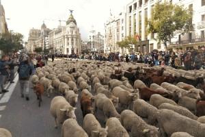 Tisuću koza i sto ovaca na ulicama Madrida - slave put na jug