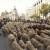 Hiljadu ovaca i sto koza na ulicama Madrida - slave put na jug