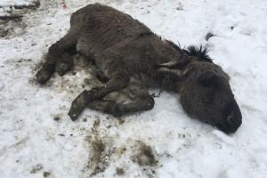 Ozdravi nam Bepo! Razbolio se magarac kojeg je spasio Antun Ponoš