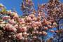 Proljetna rezidba ukrasnog grmlja i drveća